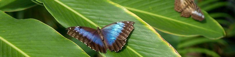 St.Martin-Butterfly-Farm