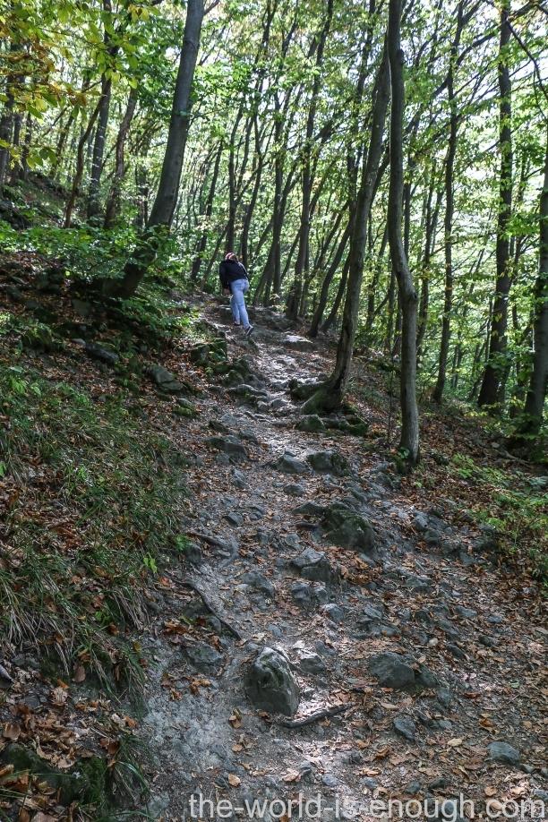 Боянский лес, Витоша, София.