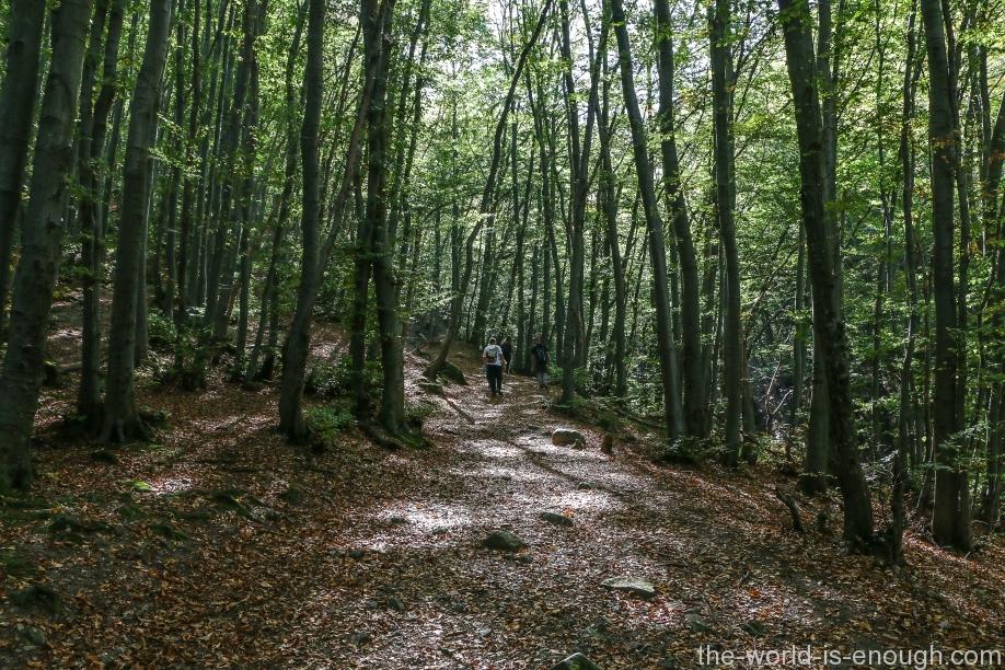 Боянский лес, Витоша, София