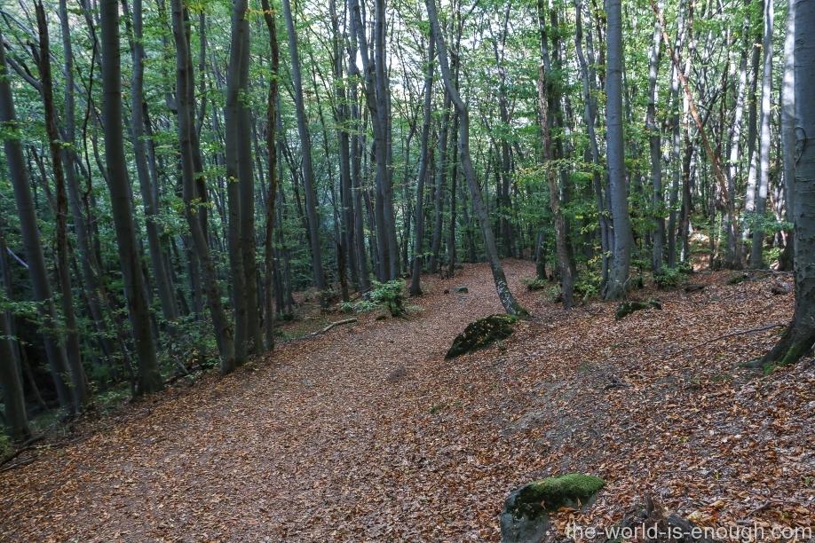 Боянский лес, Витоша