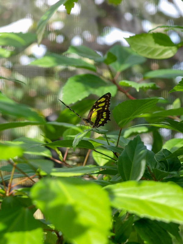 Saint Martin. Butterfly Farm.
