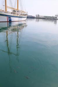 Rijeka (02)